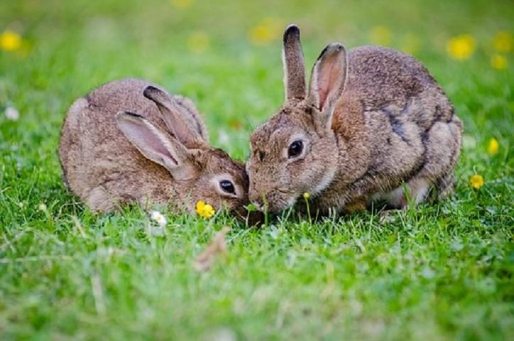 Frisk græs til kaninerne